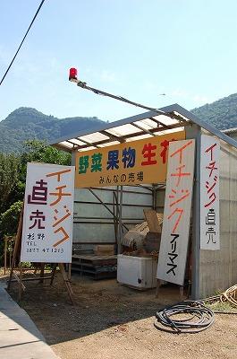 t-ichijiku1.jpg