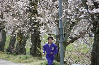 ichuusakura4.jpg