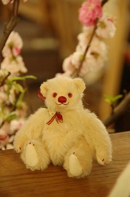 teddy005.jpg